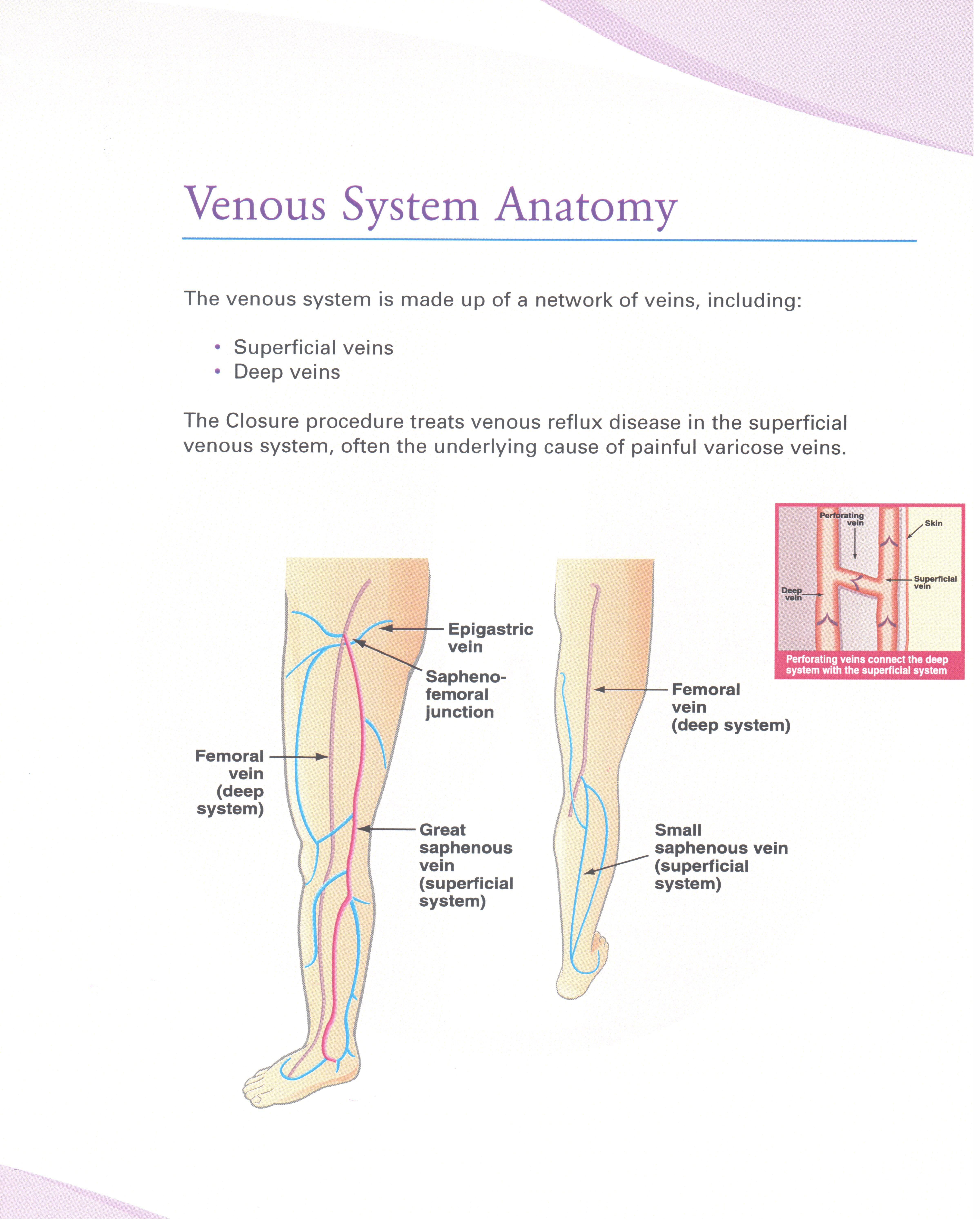 Vein Anatomy Blue Ridge Vein Clinic